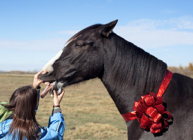 Interesting Words and Expressions – Never look a gift horse in the mouth