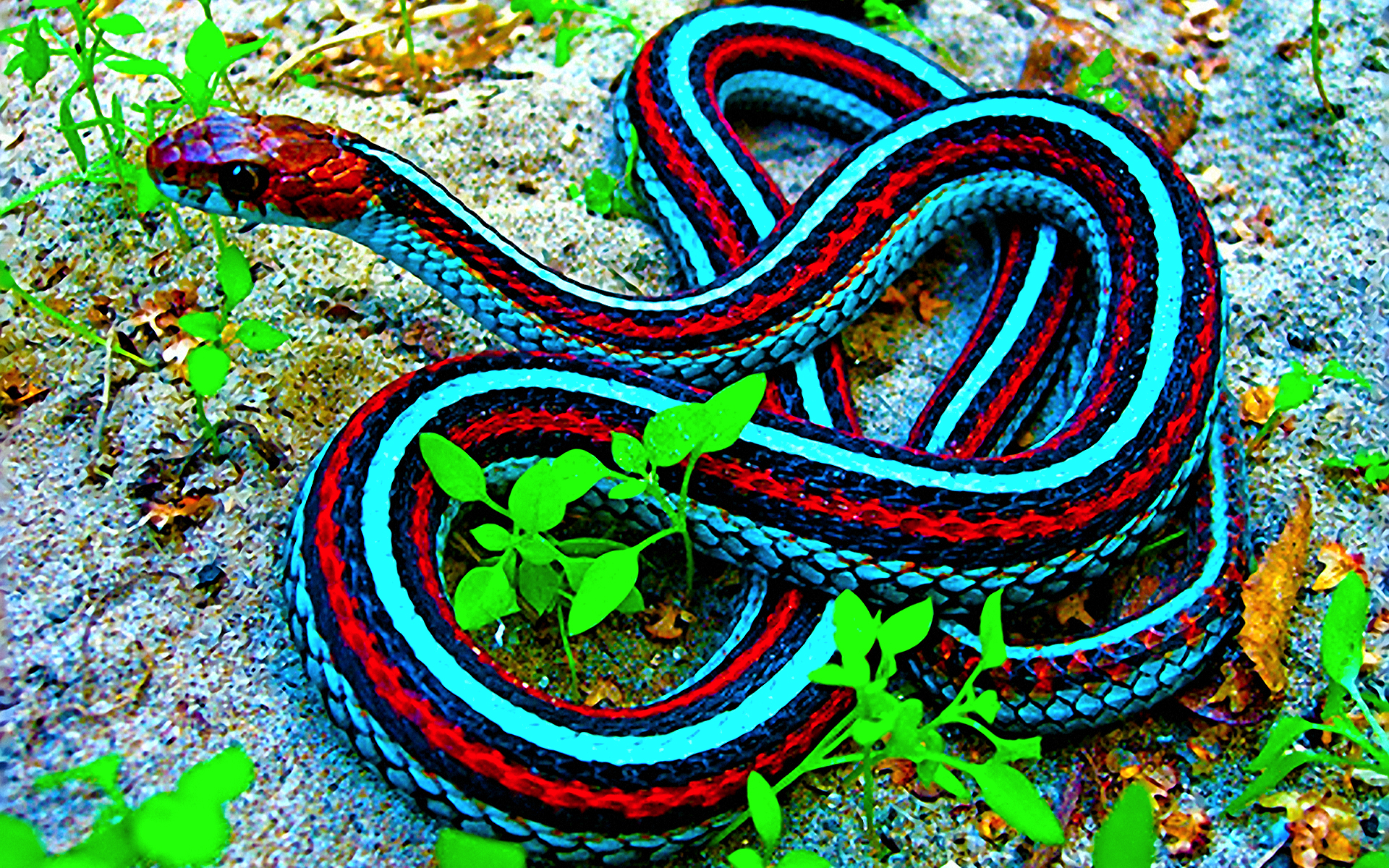 super snakes and the truth behind them blog ebg